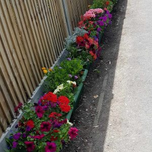 Flowers donated by the Budding Foundation
